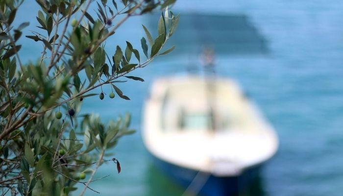 Korcula, olive tree, cruise croatia
