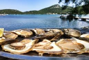 Oyster Farm in Ston, Croatia