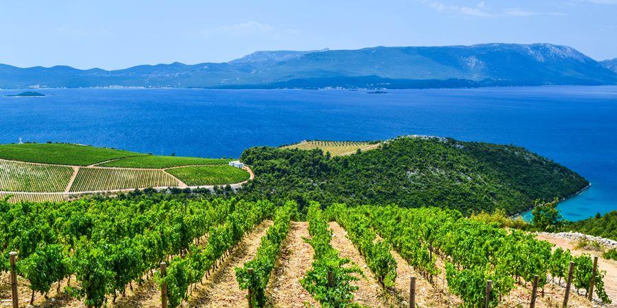 Croatia coastal vineyard