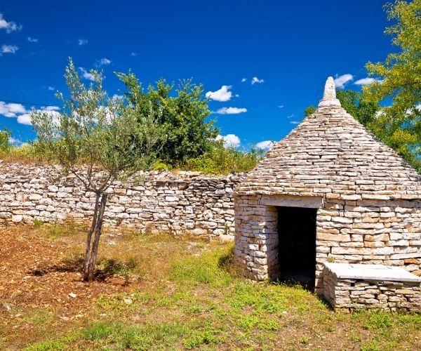 Olive Farm Istria