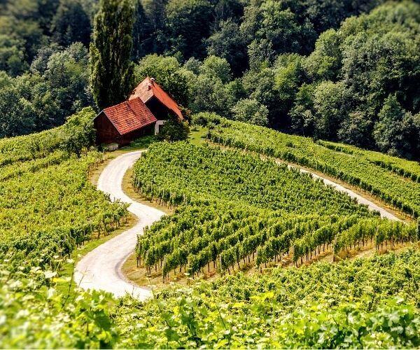 Slovenia wine
