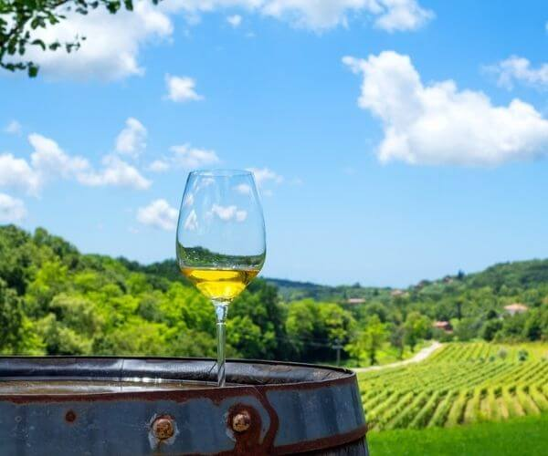 Wine Istria