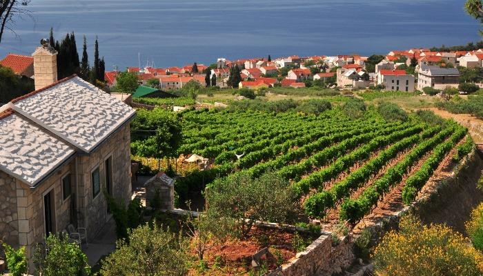 Winery, southern Brac, Croatia